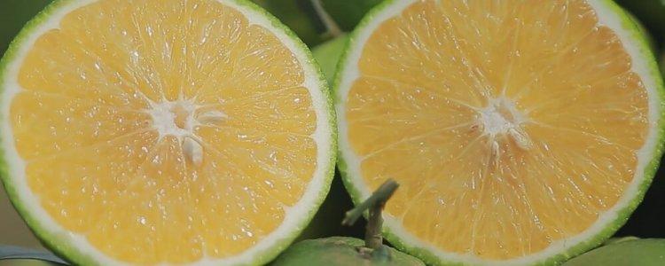 ส้มเกลี้ยง สวีทออเร้นจ์