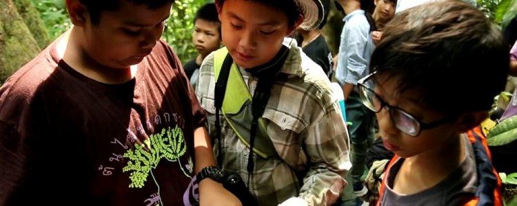 เด็กกรุงมุ่งบูโด ซ่อมโพรงรังนกเงือก