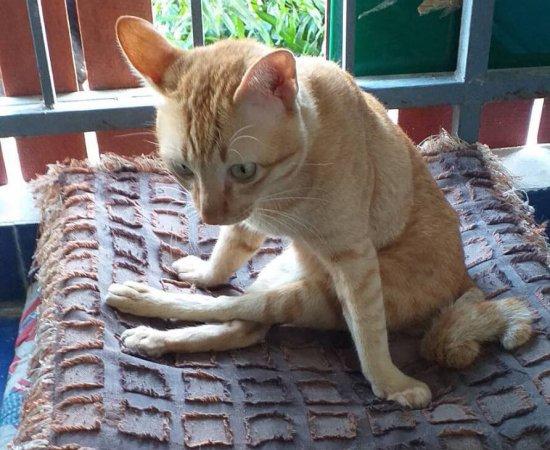 09 แมวที่รอคอยวีลแชร์