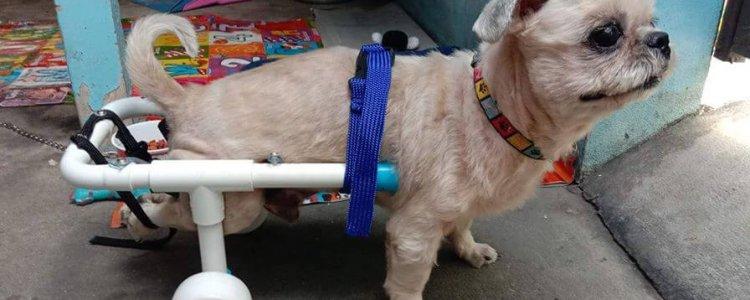 จากใจ…ถึงใจ เพื่อสัตว์พิการ