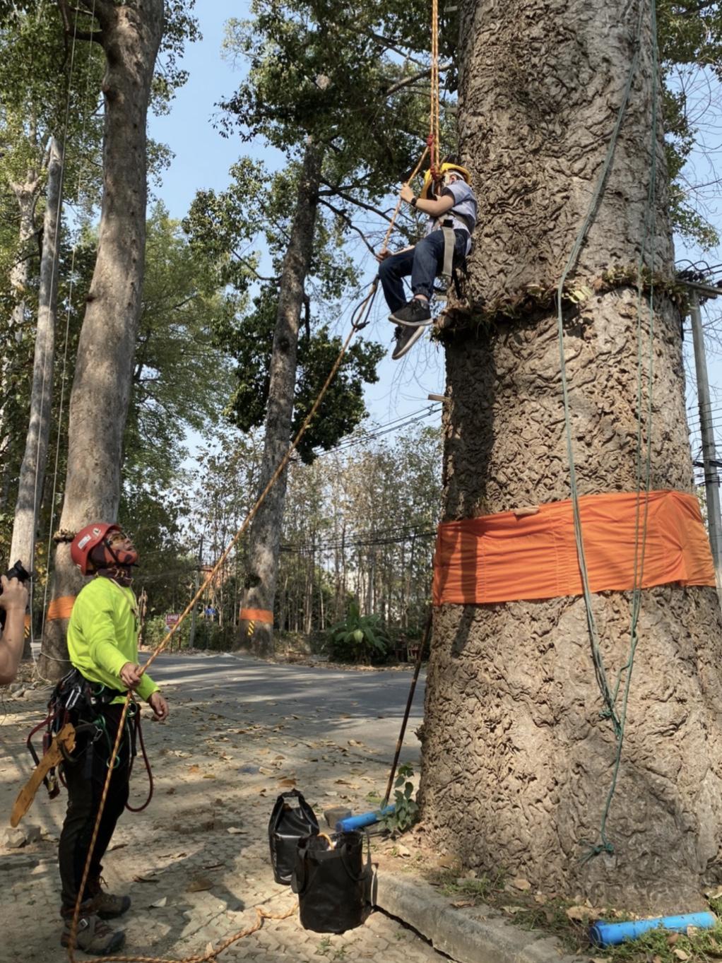 ฝึกปีนต้นไม้กับทีมรุกขกร