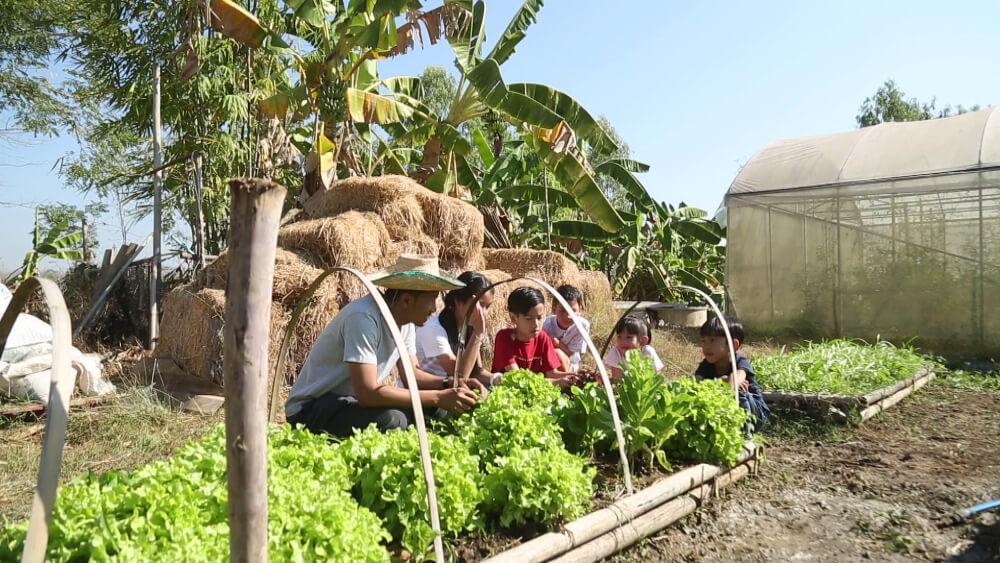 01 เด็กๆช่วยลุงรังเก็บผัก