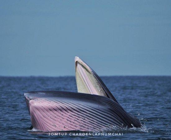 04 ผลงานวาฬของจอมทัพ