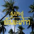 COVERมะพร้าว01